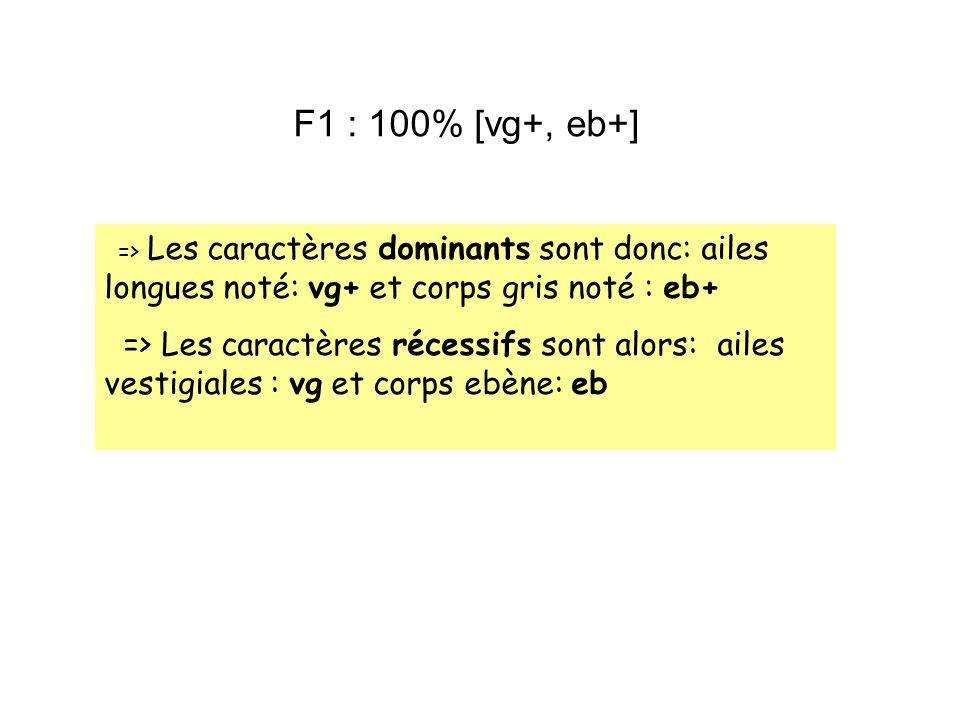 F1 : 100% [vg+, eb+]=> Les caractères dominants sont donc: ailes longues noté: vg+ et corps gris noté : eb+
